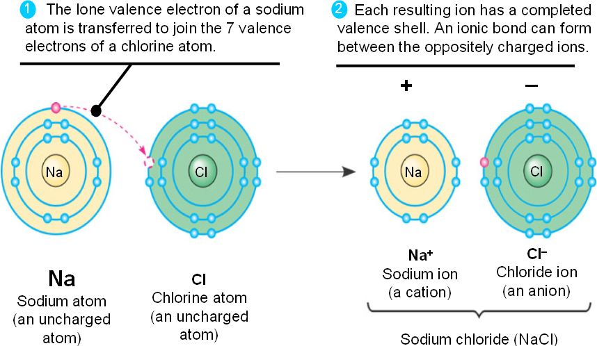 bonding atom and ionic compound Investigate how the transfer of electrons between atoms creates ions and how the  mutual attraction of these charged particles forms ionic bonds also learn.