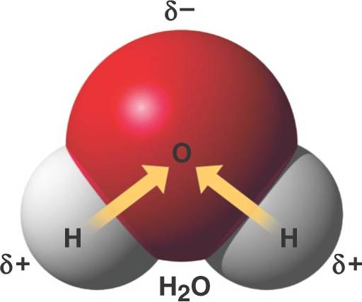 how to tell which compounds will form strong hydrogen bonds