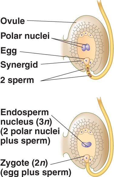 Fertilization And Implantation